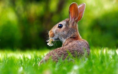 Ostern – den Frühling willkommen heißen